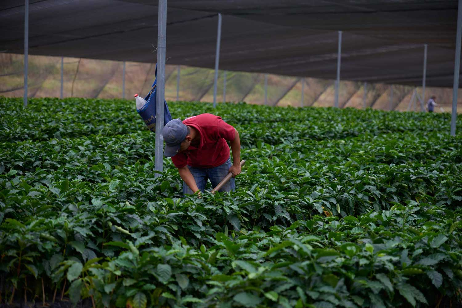 Quality management starts with the coffee farmer