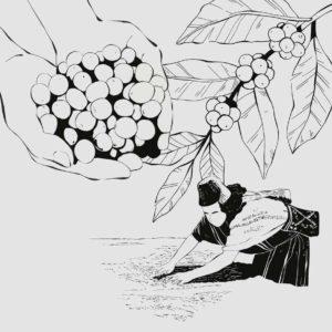Reeham Coffee Story - Die erste Ernte